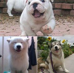 The Happiest Dogs Face Ever !