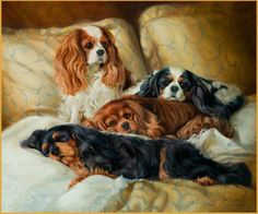 The four colors of Cavalier King Charles Spaniels: Blenheim, Black and Tan, Ruby and Tri-Color.