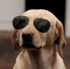 Funny Animals: People have different of kind of pets ranging from chameleons to dogs. They treat their pets as their children and love to dress them up too. Cute Dog Pictures, Funny Animal Pictures, Funny Animals, Cute Animals, Animals Dog, Animal Fun, Large Animals, Horse Pictures, I Love Dogs