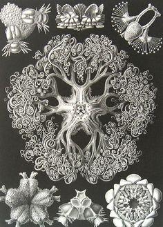 Organic forms