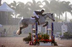 Perfect equitation, perfect horse
