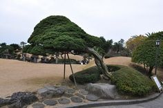 bonsai garden | Flickr: Intercambio de fotos