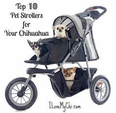 If you are thinking of getting your dog a pet stroller, read my top 10 picks first.
