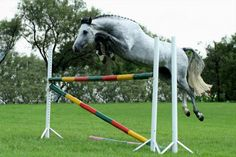 Capital Stallions
