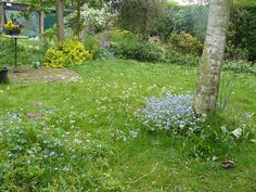 Vroege Vogels: Tuinreservaten Achtertuin bij een hoekwoning. Tuin is 11 m. breed en 35 m. diep.  Bestaat uit 3 gedeelten.  Dichtbij huis, grasveld met border  Midden is deels houtwal, deels moestuin en vijver van 8 m2.  Achterste deel kippenren, kas, schuur, houtwal en composthoop Grootte:400 Ligging:ZuidOost Type tuin:Natuurlijke tuin  Grondsoort:Zandgrond Uren werk:< 3 uur in de week