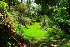Check out this awesome listing on Airbnb: Magical Tropical Fantasy - Room 1 - Houses for Rent in La Fortuna