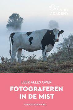 15 tips voor fotograferen in de mist • Vink Academy