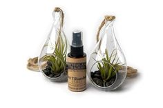 Air Plant Black Forest Set B, 2 Teardrop Terrarium Combo Pack with 2 oz. Fertilizer