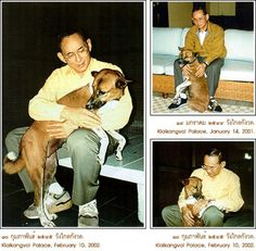 The King and his dog. King of Thailand. My beloved King, ♥Bhumibol Adulyadej, Rama IX, the ninth monarch of the Chakri Dynasty, crowned on the 9th June 1946, is the longest ever reigning King of Thailand and the defender of the Buddhist faith in Thailand. http://www.islandinfokohsamui.com/