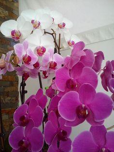 Mis orquideas abril 2014