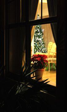"""Looking in on Christmas"" @Lynn Bonn  #Christmas, #holiday, #Christmas Tree, #window, #Vero Beach, FL"