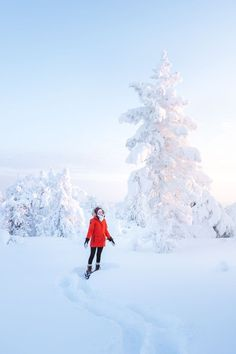 The Ultimate Guide to Visiting Lapland, Finland in Winter Finland Travel Destinations Helsinki, Northern Lights Ranch, Amazing Destinations, Amazing Hotels, Holiday Destinations, Travel Destinations, Finland Travel, Europe On A Budget, Cannon Beach