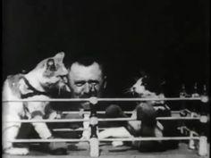 Okazuje się, że nasi ulubieni bohaterowie - śmieszne koty, wygłupiały się na długo przed tym, zanim pomyślano o pierwszym komputerze. Dzięki zbiorom amerykańskiej Biblioteki Kongresu zobaczyliśmy na własne oczy, że pierwsze filmy z kotami, które miały rozśmieszać widza, powstawały jeszcze w XIX wieku. Przedstawiamy film pt. ''Koci bokserzy (prof. Weltona)'' nagrany w... 1894 roku.