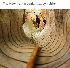 The view from a leaf Is of ribs and spine The curl As if of a rib cage And a herd of deer Silhouetted beyond Photo may be copyrighted