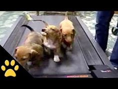 3 Cute Puppies On A Treadmill - YouTube