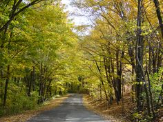 Germantown MetroPark in the Fall with canopy