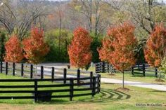Markel Monday - Does Your State Equine Liability Legislation Cover Your Equine Operation?