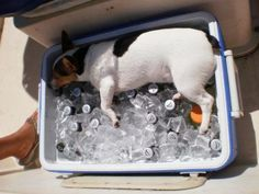 It was a hot day and I needed to cool off!