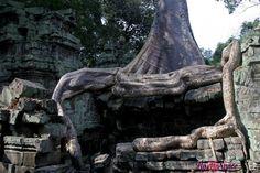Ta Prohm, il tempio inghiottito dalla foresta   www.romyspace.it