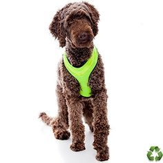 LED Dog Safety Harness  Illuminated and Reflective Flashing Dogs Vest That Light Up For Safe Night Walking  USB Rechargeable  Fully Adjustable  Green  PLEASE Measure Dog Before You Order * Check out this great product.