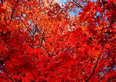 Autumn Decor - Photo Print - Home Decor - Nature Photography - Harvest Decor - Thanksgiving Decor - Seasonal Decor - Fall Decor - Wall Decor