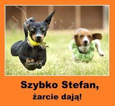 Weekend Humor, Wtf Funny, Funny Animals, Pikachu, Haha, Jokes, Husky Jokes, Ha Ha, Funny Animal