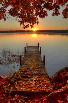 Autumn colors and perfectly carelessly-strewn leaves at the shoreline in sunset.