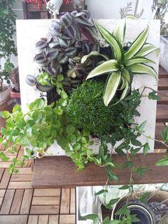 my first vertical garden