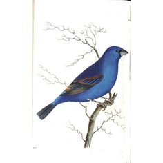 Vintage Printable Blue Birds ❤ liked on Polyvore featuring animals