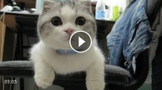Ultimate Funny Cats Compilation 2014 | Cat MEOW!