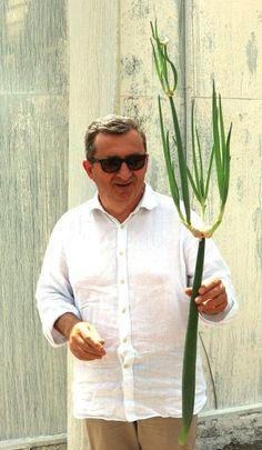 Vito e la cipolla egiziana ligure. Un amore a prima vista