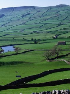 The Dales, Yorkshire, with traditional stone walls...