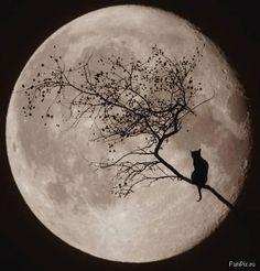 Beautiful ...moon....