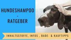 die besten 25 hundeshampoo ideen auf pinterest mittel gegen hundefl he floh shampoo und. Black Bedroom Furniture Sets. Home Design Ideas