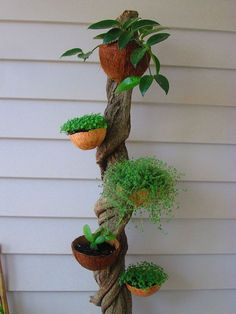Coconut shells attached to a vine for a naturally beautiful vertical planter.
