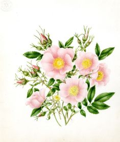 tattoos wild rose and rosehips - Google Search