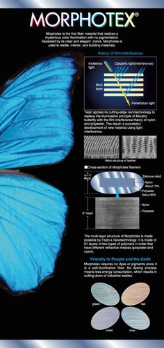 Biomimicry: Structural Color | Beautiful Networks