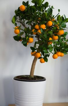 Hi guys! We bought this cool tree from Ikea yesterday :-) The dinner was great, we had owen potatoes, some shrimp sauce for appertizer, pitas for main course and sorbet for dessert. So gooood! And t