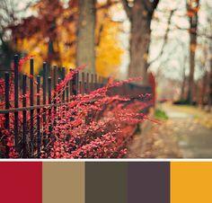 Fall walk colour palette