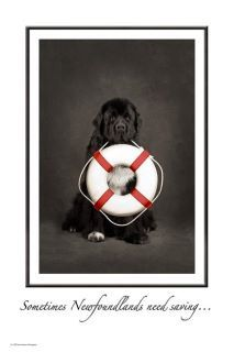 Regional Clubs raise money to support causes like - CancerAwareness Big Dogs, Large Dogs, Dogs And Puppies, Rip Love, Newfoundland Dogs, 12 Year Old, How To Raise Money, Mans Best Friend, Cancer Awareness