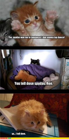 Harry Potter scenes with kittens<< my gosh this is adorable!<< it's hilarious! Harry Potter Humor, Harry Potter Hermione, Funny Laugh, Hilarious, Funny Puns, Albus Dumbledore, Thats The Way, Cat Memes, Hogwarts