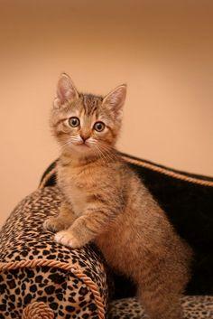 kitty - Share cute
