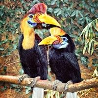 Knobbed Hornbill at Los Angeles Zoo Los Angeles, CA #Kids #Events