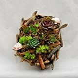 Holidays Succulent Driftwood Wall Artwork 60050 Care For Your Indoor Vegetation It's a tough activit Driftwood Wreath, Driftwood Wall Art, Driftwood Projects, All You Need Is, Succulent Wall Art, Clay Pots, Tropical Plants, Wall Sculptures, A Boutique