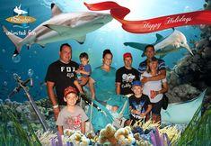 Aquarium, Pictures, Goldfish Bowl, Aquarium Fish Tank, Aquarius, Fish Tank