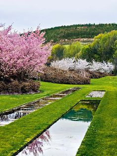 The Duchess of Northumberland, Jane Percy, pens a memoir of her time working with the late, great landscape designer Jacques Wirtz. Landscape Architecture, Landscape Design, Flowering Cherry Tree, Brick Path, Garden Park, Mediterranean Garden, Ornamental Grasses, Garden Projects, Water Features