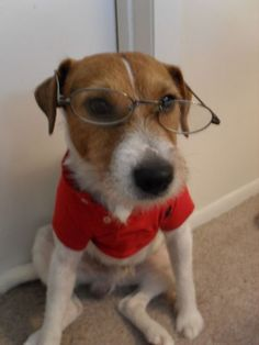 Image detail for -Jack Russell | Dogs In Duds For Dogs Who Like To Dress Up