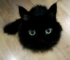 Black fluffball.