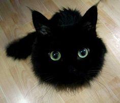 Black fluffball.