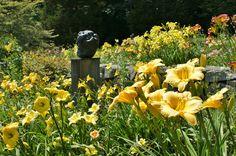 https://flic.kr/p/adnPJu | Hemerocallis (Daylily garden) (1)